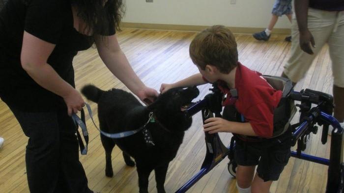 Intervenções Assistidas por Cães